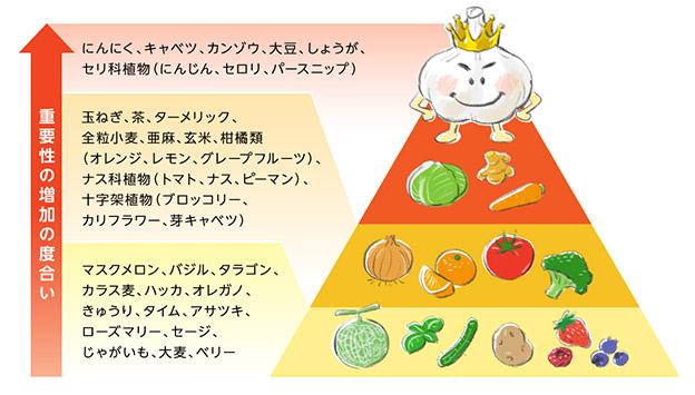 デザイナーフーズ・ピラミッドでは、にんにくがガンを防ぐ野菜として最も重要視するべきものであると評価されている