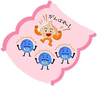 ガン細胞を攻撃するNK細胞をにんにく成分で正常に