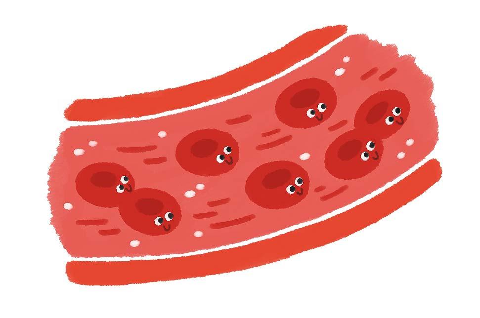 アリインの効果:血管を拡張して、血液の流れをよくすることで精力アップを促します