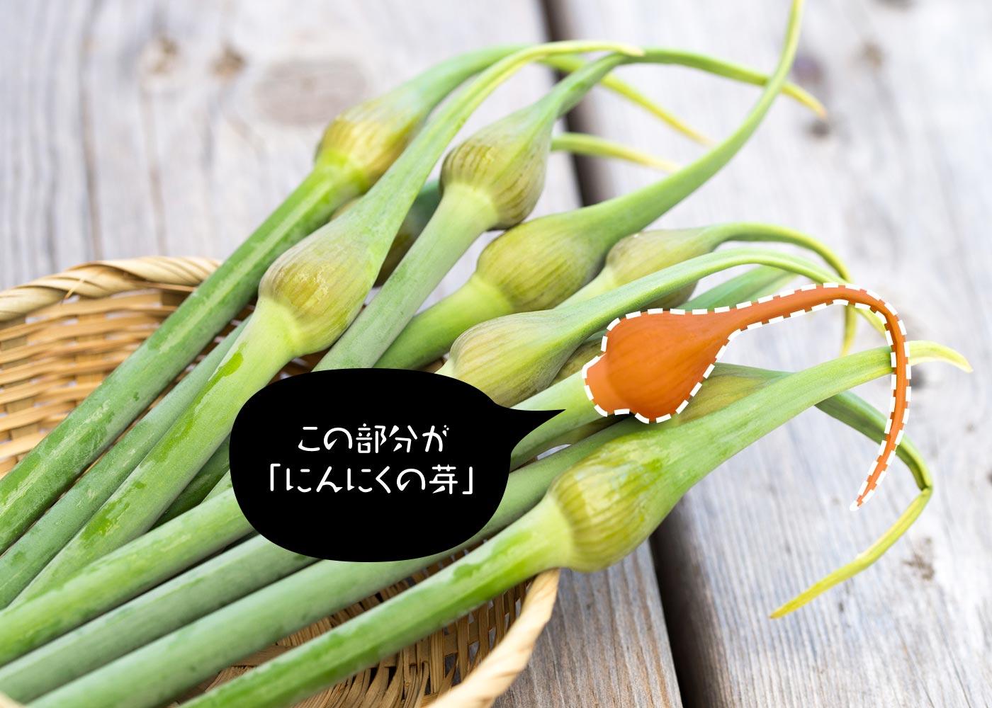 にんにくの芽の正体とは?
